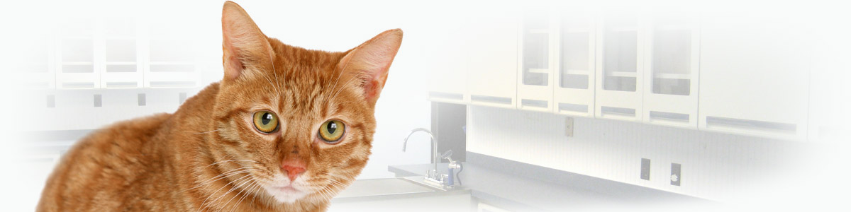 Специализированная клиника для кошек - Мяура